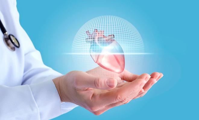 Nuevos descubrimientos sobre la regeneración del corazón