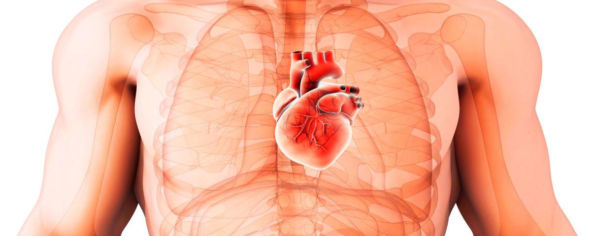 El particular cáncer de corazón