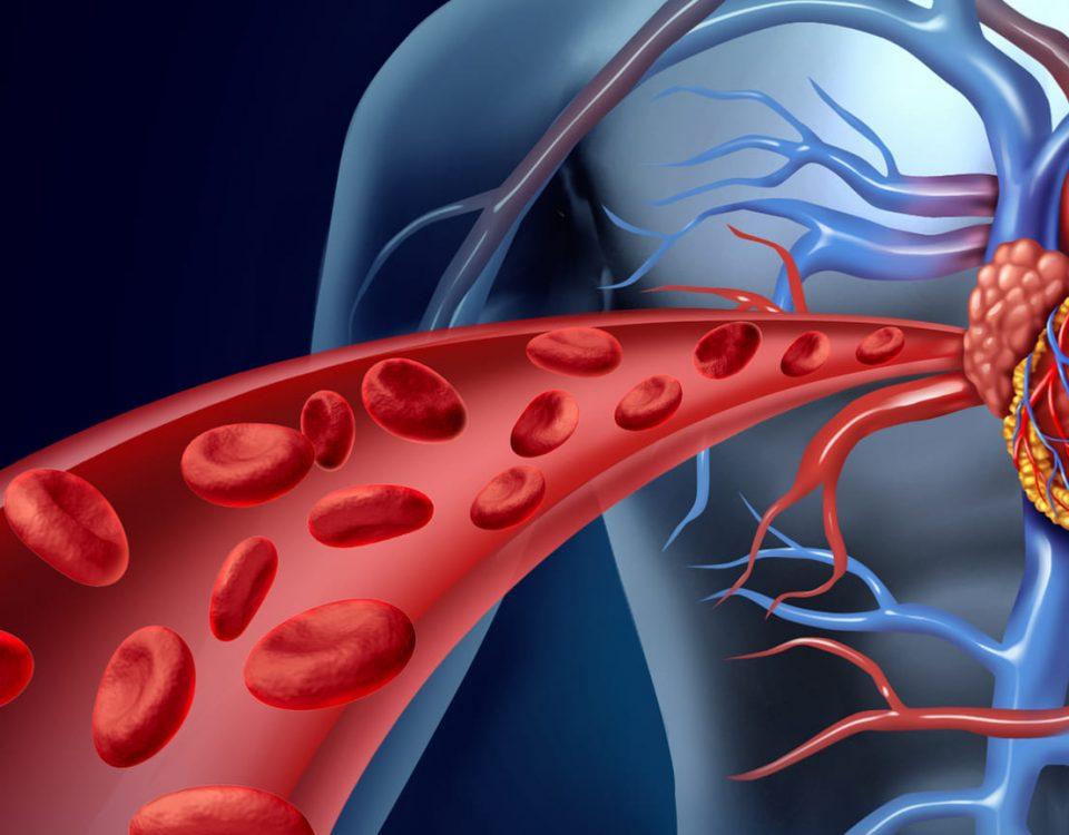 Aprende a cuidar tu sistema circulatorio