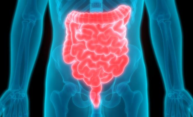 Hongo intestinal relacionado con riesgo cardiovascular