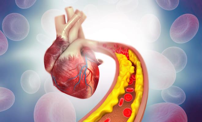 Identificado un mecanismo del envejecimiento del corazón
