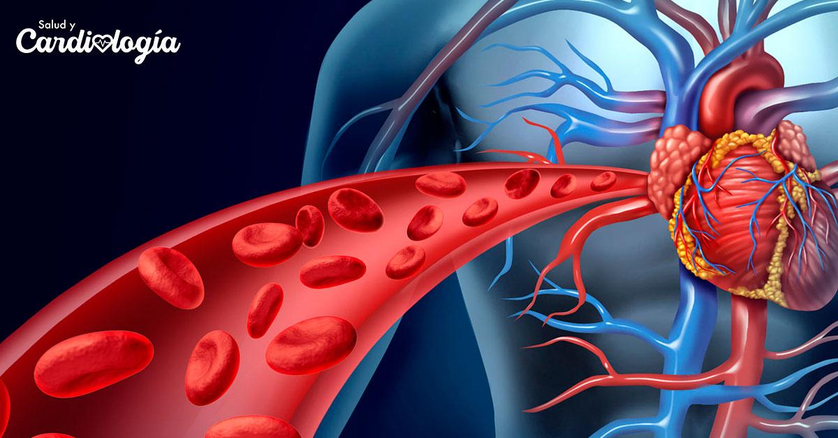 Aprende a cuidar tu sistema circulatorio | Revista Salud y Cardiología