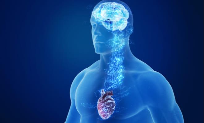 El síndrome del corazón roto se originaría en el cerebro, según estudios recientes