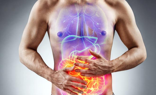Células inmunitarias intestinales: importancia para la salud cardiovascular